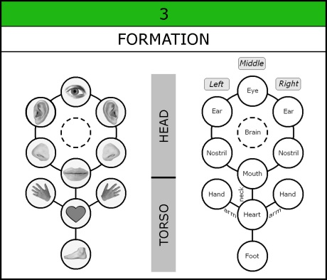 Chart-031-Formation-Organs-002