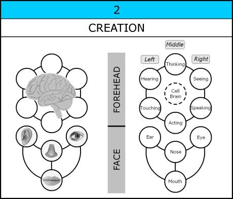 Chart-032-Creation-Organs-002